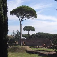 Cool Trees at the Palatine