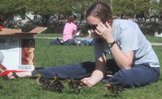 Ducklings on the Quad