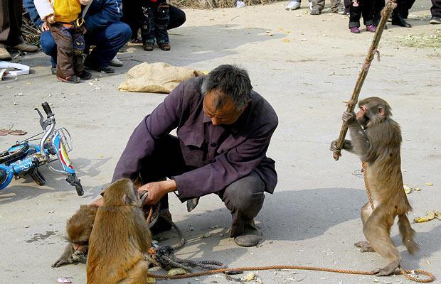 monkey-stick_1207558i