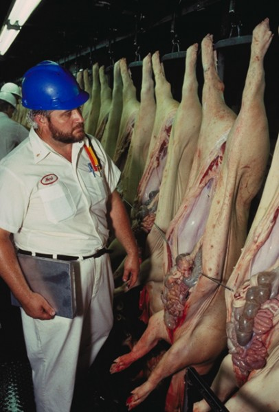 A  USDA inspector reviews the carcasses of slaughtered pigs for our safety.  Credit: Wikmedia Commons